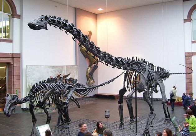 Natural history museum frankfurt
